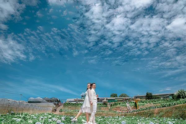 Album ảnh cưới tại vườn hoa Cẩm Tú Cầu Đà Lạt đẹp mê hồn (4)